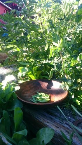 FFF Peas Bowl