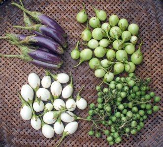 Assorted Eggplants